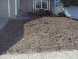 7-Amended-soil1