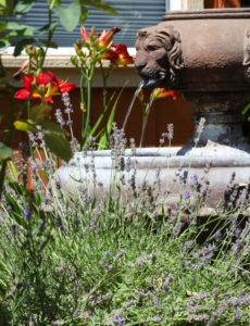 Sonoma County Landscape Design Services