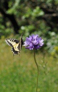 Butterfly-191x300